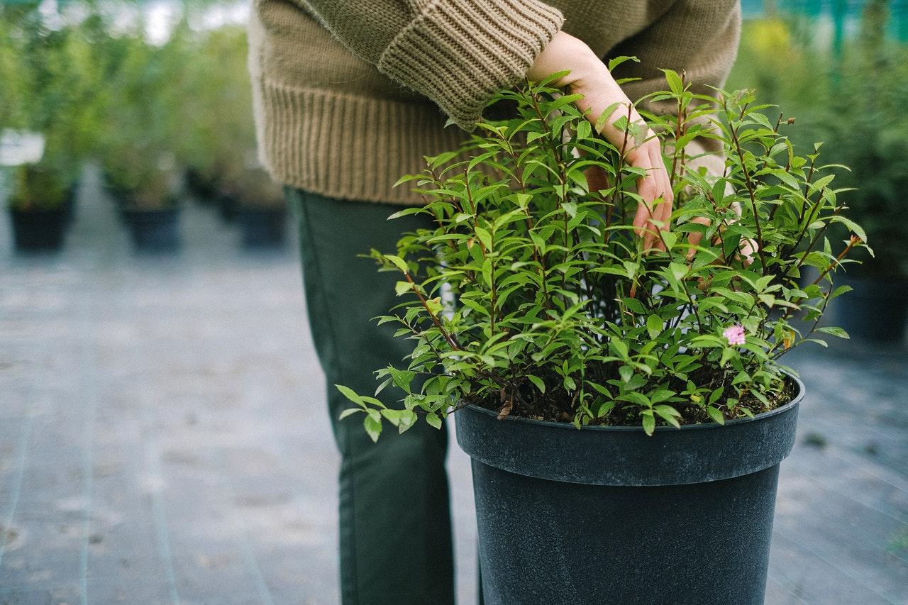 L'enseigne Botanic devient entreprise à mission