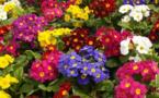 Les entreprises françaises se mettent au jardinage pour les employés