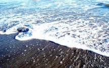 La stratégie océan bleu : quand vaincre la concurrence revient à ne pas l'affronter