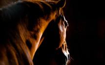 Management : un problème ? Parlez en aux chevaux !